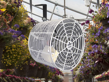 Greenhouse Ventilation For Commercial Greenhouses