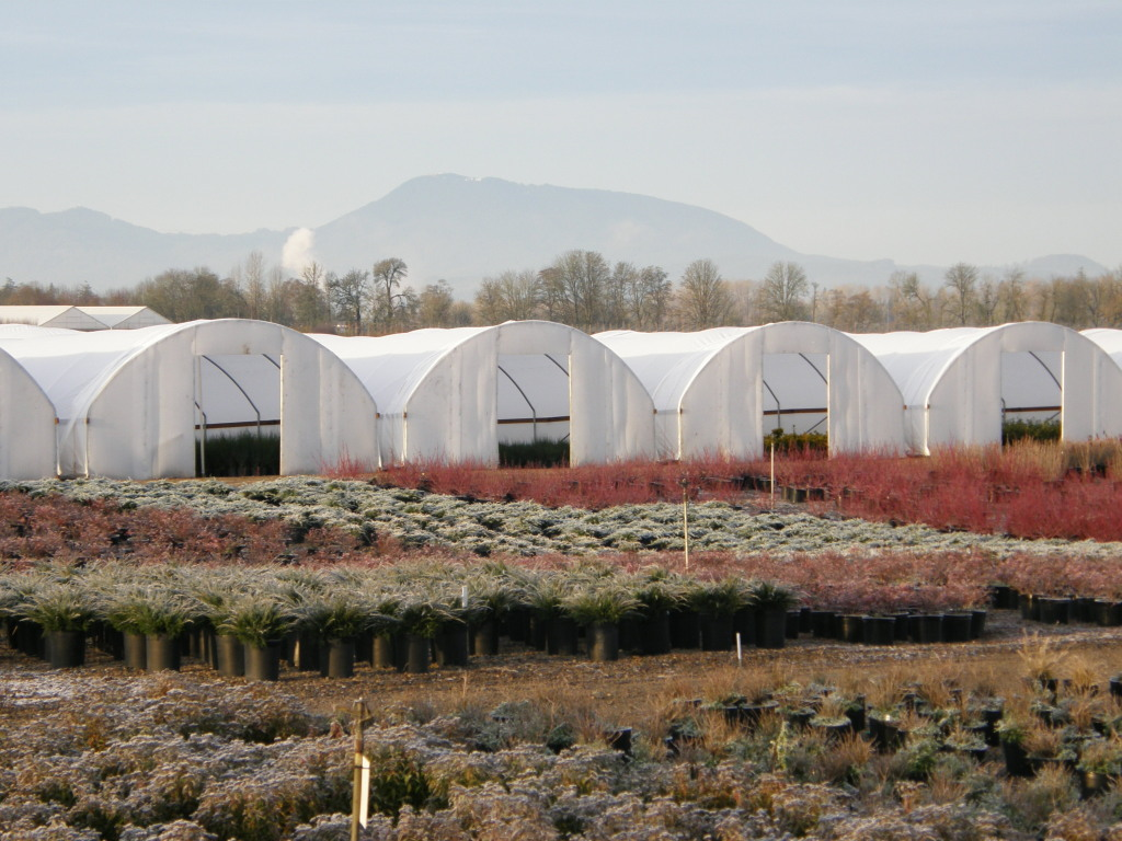 Solexx is a perfect covering for greenhouse endwalls and sidewalls