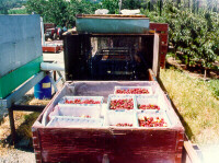 Harvesting totes are water proof and fruit can be washed right in the totes
