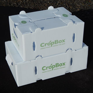 CSA sealed flute produce box